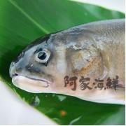 香魚/母-整箱出貨(10盒/箱)