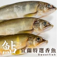 特選宜蘭公香魚(9尾) 1kg±10%/盒 新鮮 公香魚 來自宜蘭純淨水質的香魚 乾煎 鹽烤 特選純淨水域出產 快速出貨