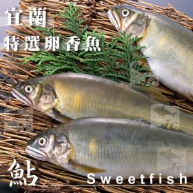 宜蘭鮮嫩大香魚(帶卵)/1kg±10%/盒(6尾)