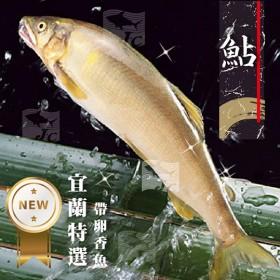宜蘭鮮嫩大香魚(帶卵) 3尾/包(166g±5%/尾)