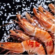 活凍草蝦 8尾、6尾 (二種規格)