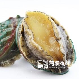 熟凍帶殼小鮑魚(16顆) 淨重570g/盒
